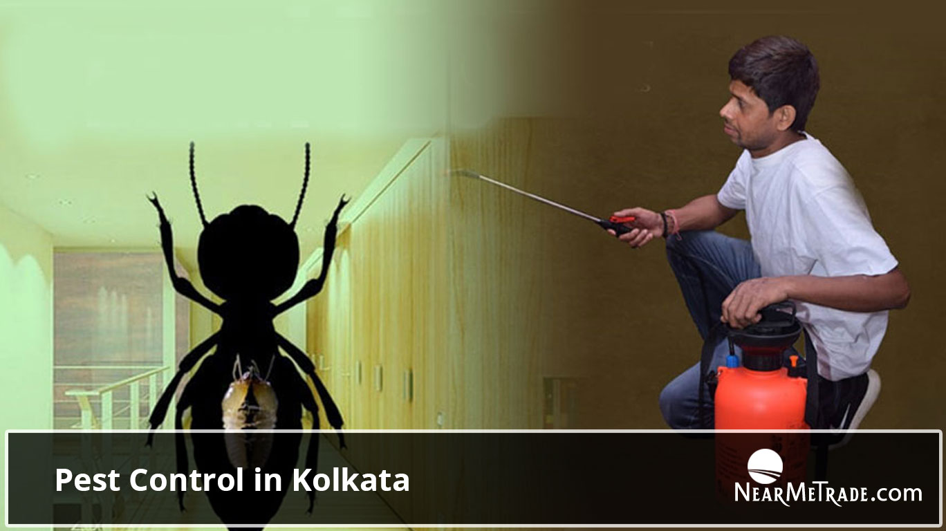 Pest Control in Kolkata