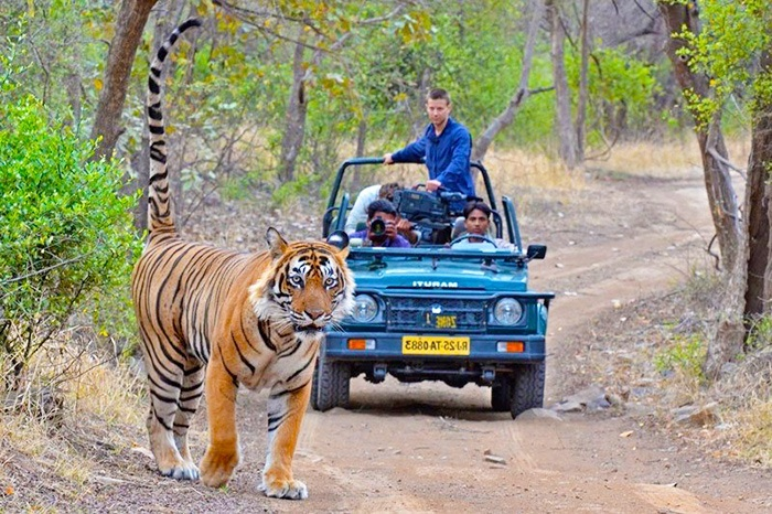 8 Days Golden Triangle Tour of Delhi, Agra, Ranthambore Wildlife Safari and Jaipur