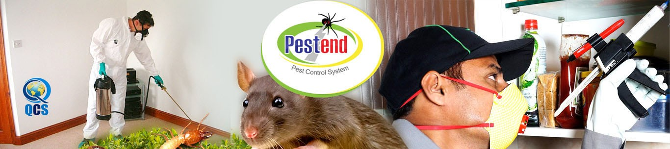 Pestend International