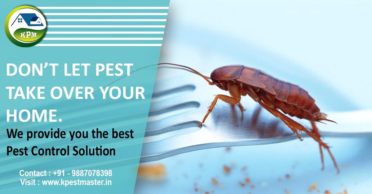 Kushgra Pest Master