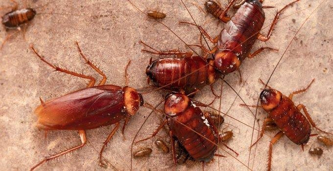 Golden Pest Solutions