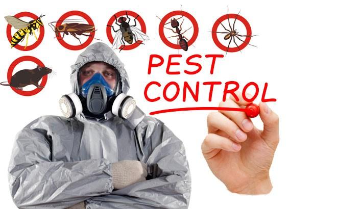 Juhi Pest Solution