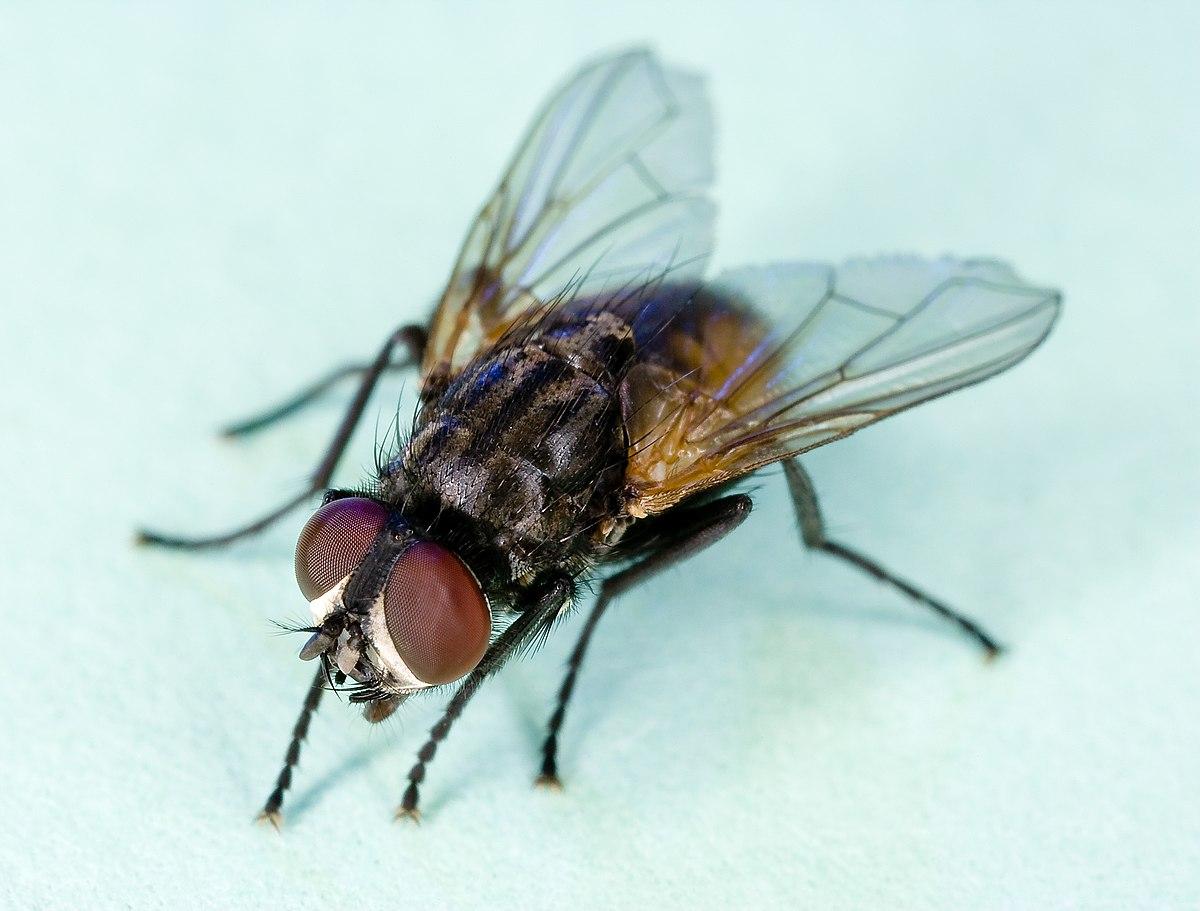 Eco-friendly Pests