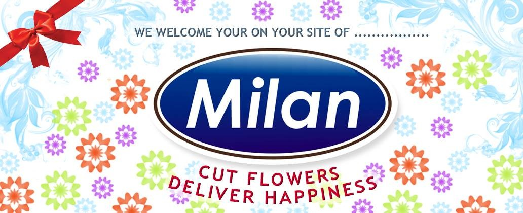 Milan Cut Flowers