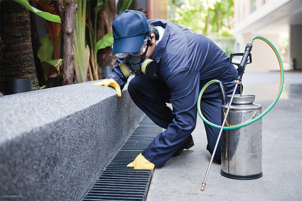 Pest Control Odhisa