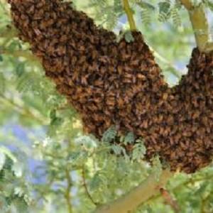 Rush Termite & Pest Control