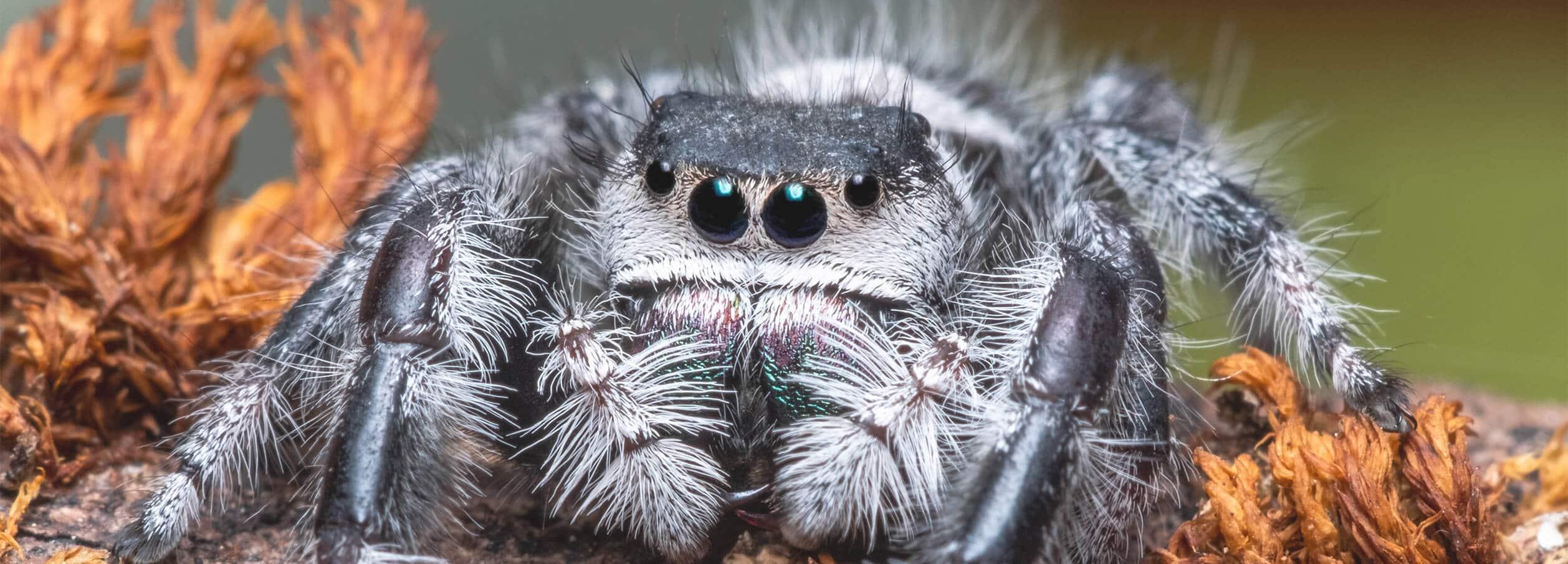 Elite Pest Control Adelaide