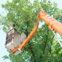 Monstrosity Tree Service LLC