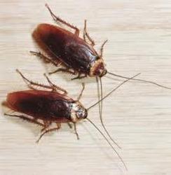 Anz Pest Control