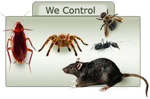 Icare Pest Control