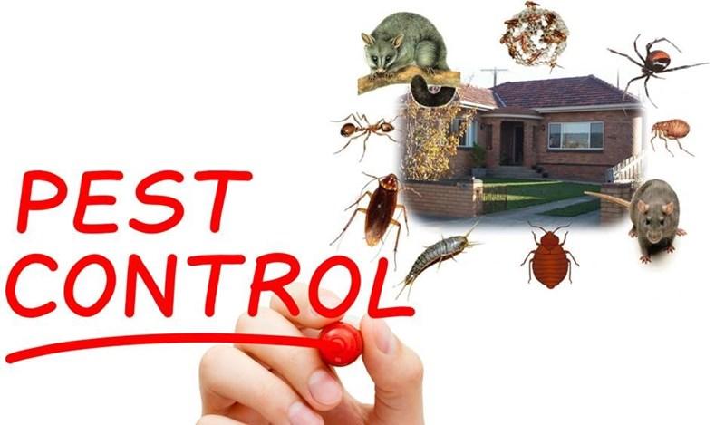 D Line Pest Control