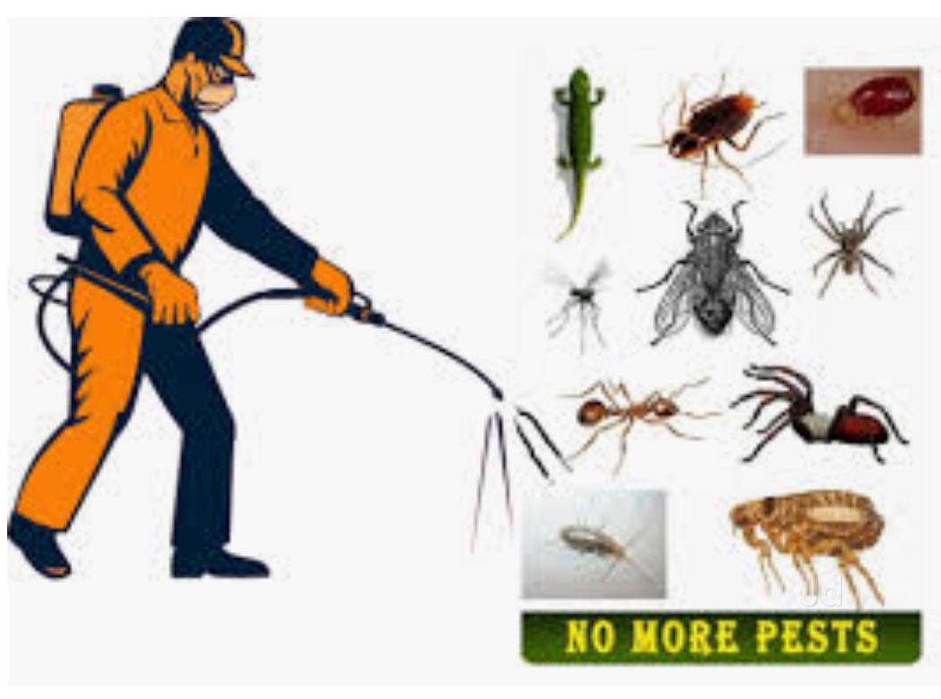 Gng Pest Control Management Services