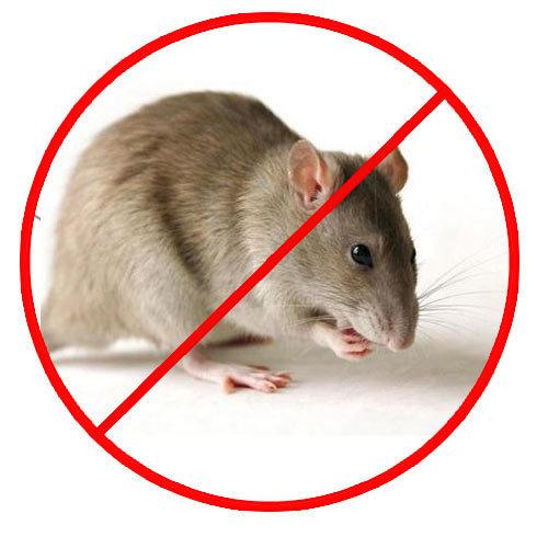 Ganpati Pest Control