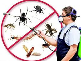Insect Killer Services