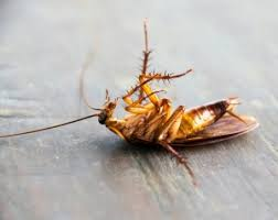 Vijay Pest Control