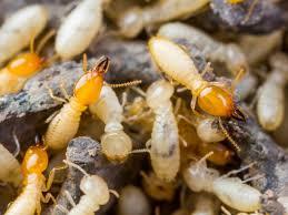 We Control Pest
