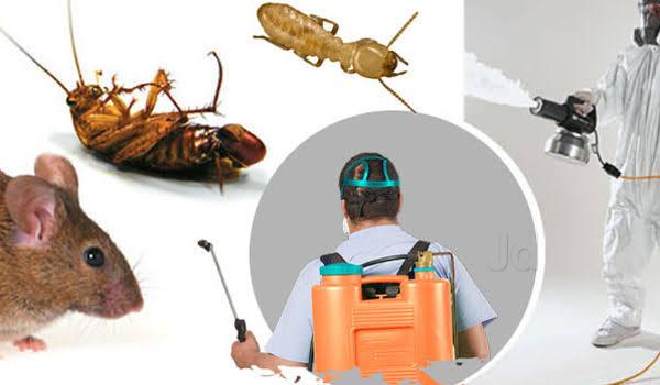 DNA Pest Control Service