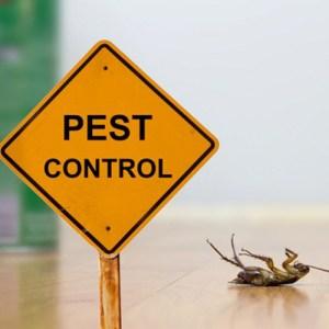 Indian Pest Control Service
